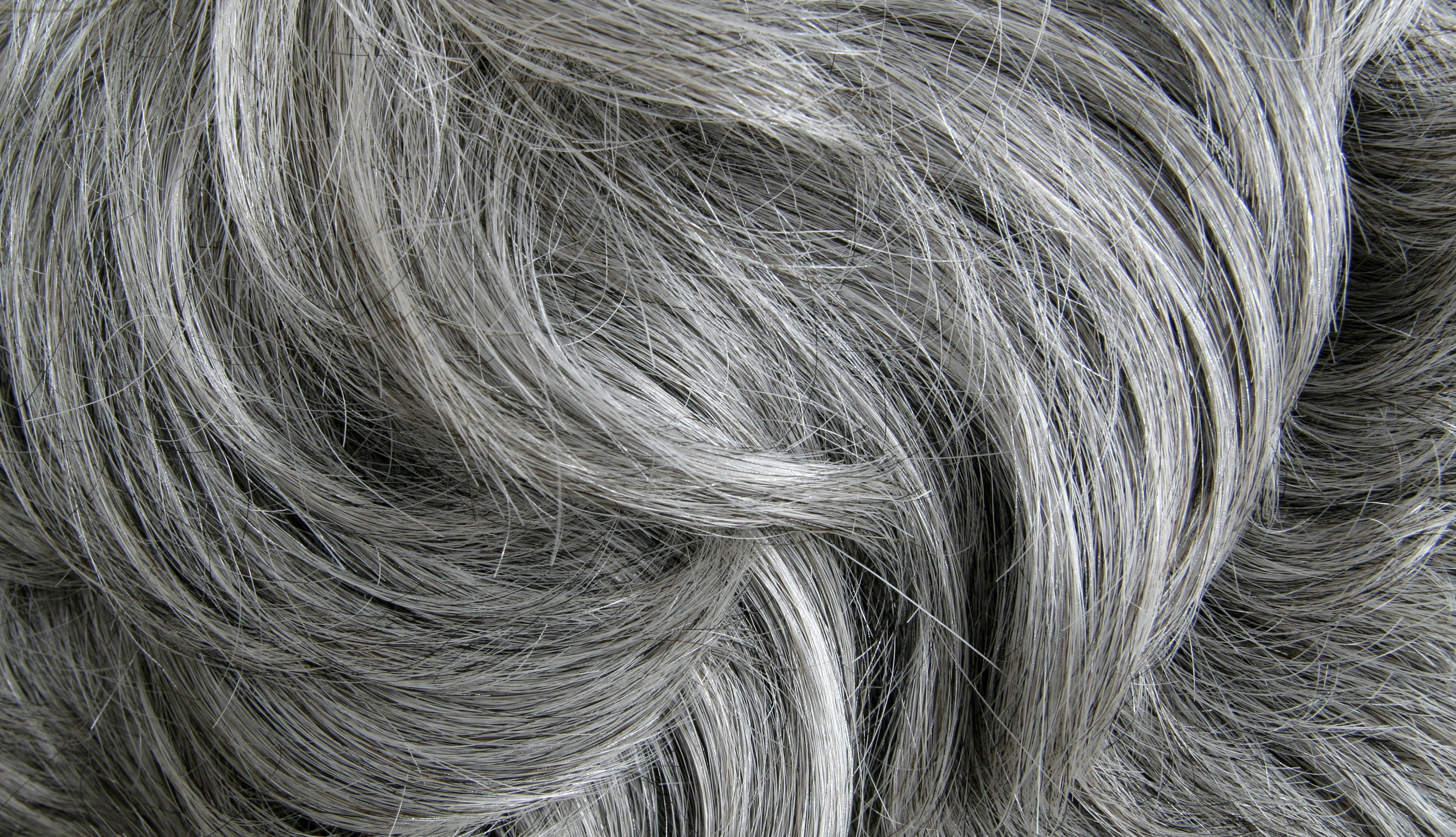 A close-up image of gray hair