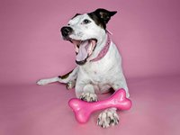 Terrier with pink bone - celebrations of pets, reading and other holidays we should begin to observe