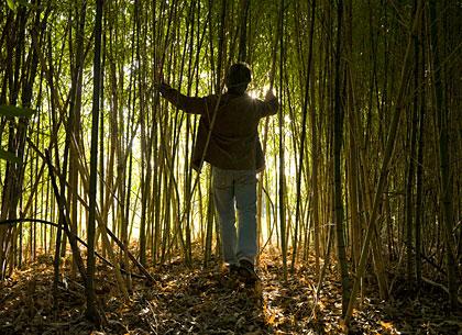 420_curious_bamboo.jpg