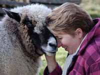Catherine Friend author Sheepish - sheep and wool