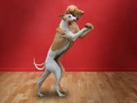 Two dogs dancing, Book review for Dancing Dogs exploring human dog relationships