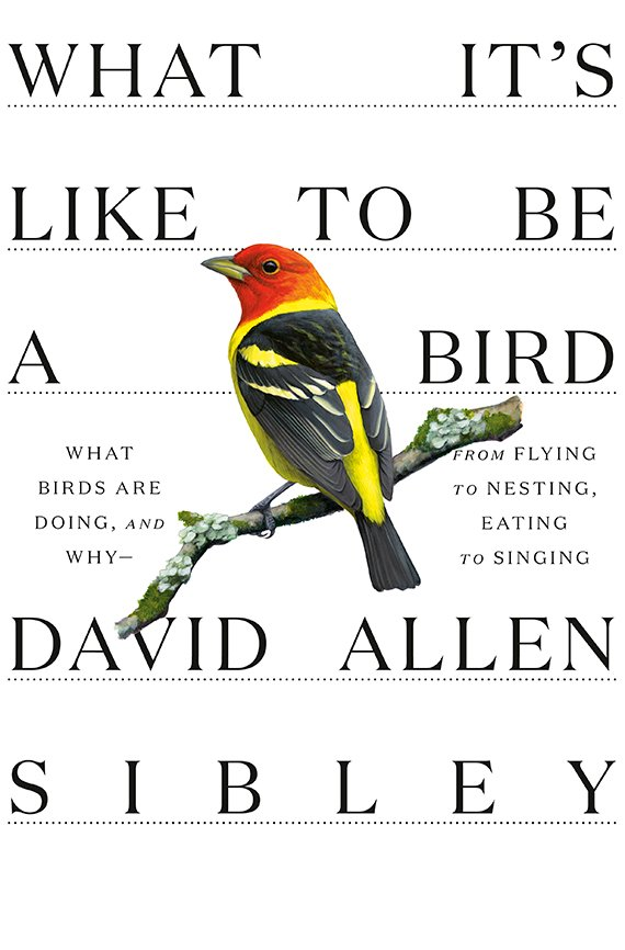 What It's Like to Be a Bird book cover