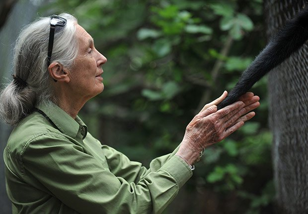 Jane Goodall, 80. April Milestone Birthdays.