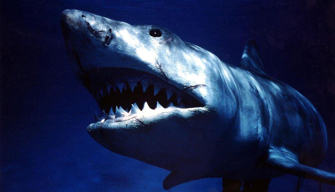 Tiburón - Películas taquilleras del verano