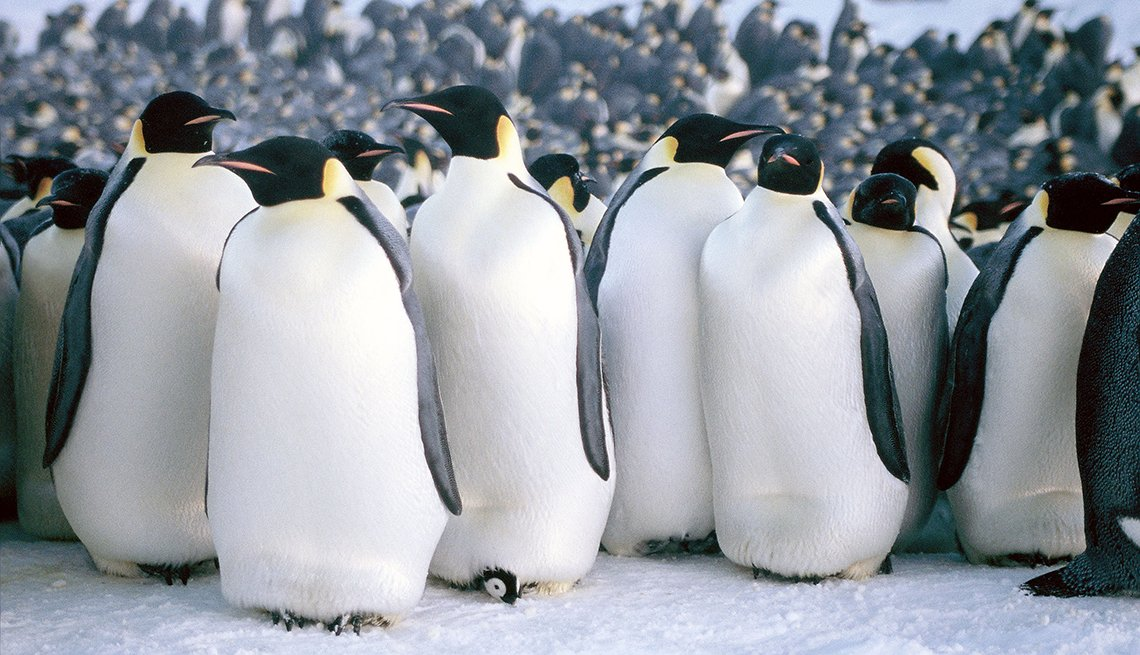 A scene from the documentary March of the Penguins