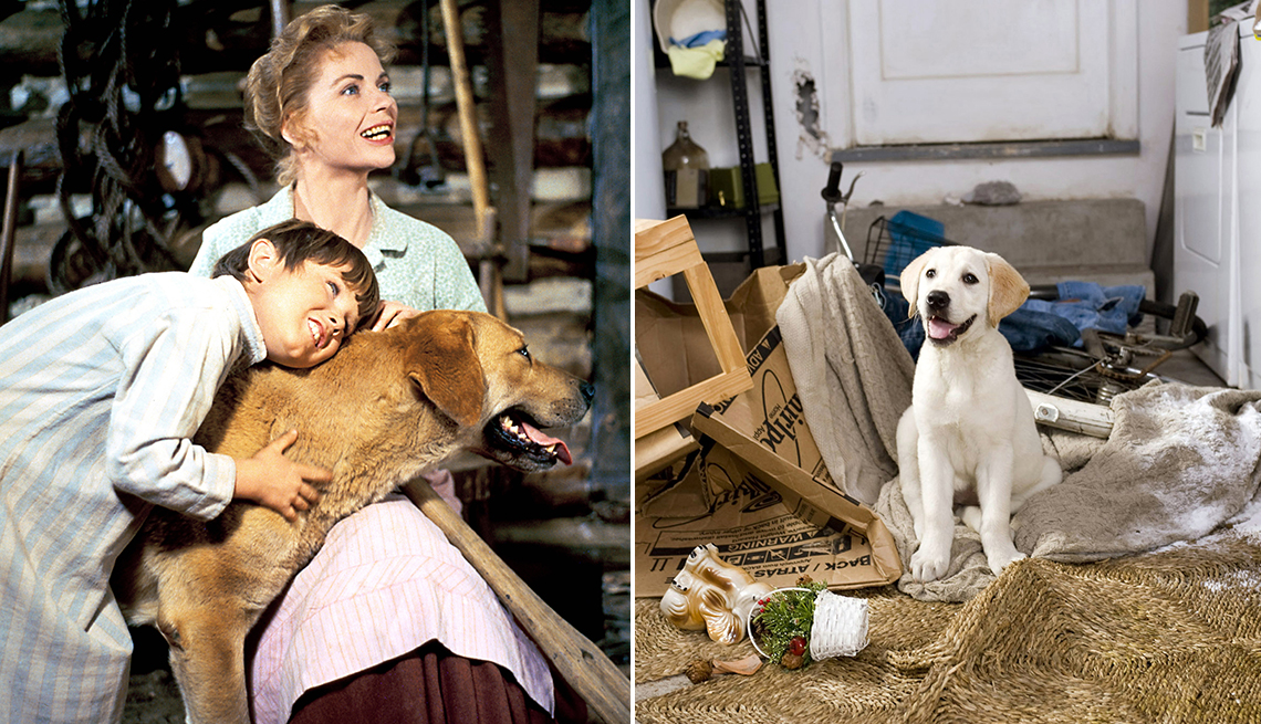 characters from old yeller holding the dog and the puppy from marley and me sitting in a messy home