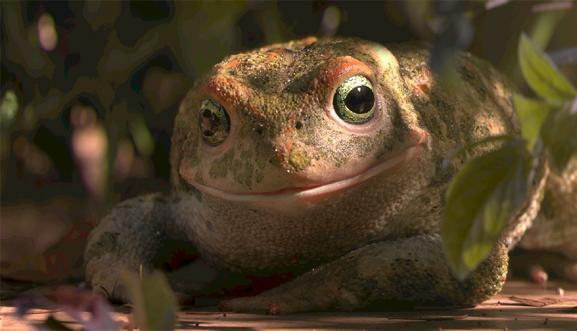 Escena del corto animado nominado al Óscar 2018 Garden Party