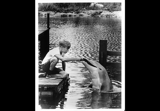 Flipper. Jeopardy Anniversary Game Show.