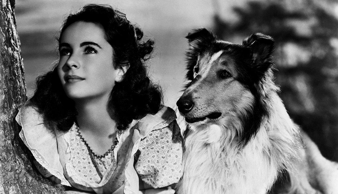 Animales estrellas de cine y TV - Elizabeth Taylor y la perra de raza collie Lassie