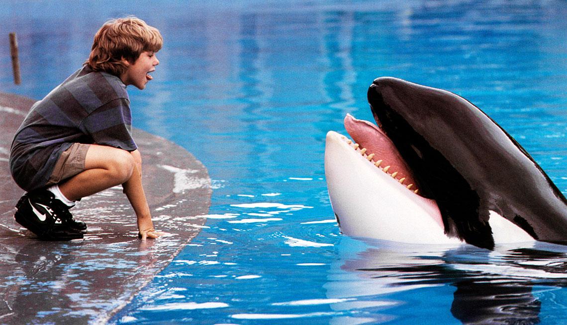 Animales estrellas de cine y TV - Keiko orca macho protagonista de Free Willy