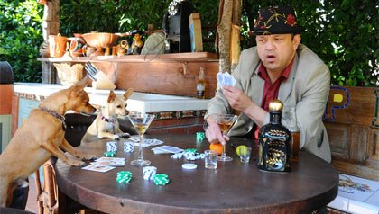 Paul Rodriguez juega póker con dos chihuahuas.