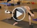 Gatos buscan dueño en clase de yoga