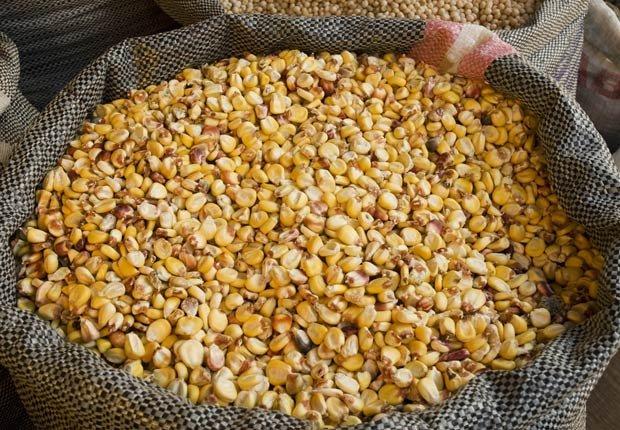 Chullpi - 10 tipos diferentes de Quinoa.