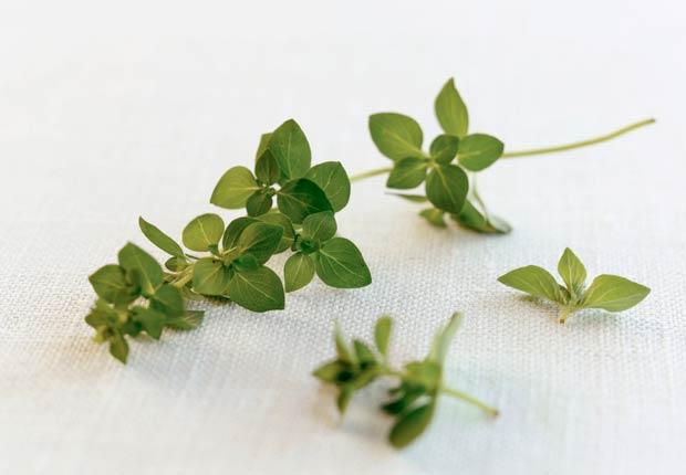 Oregano - 10 especias que mejoran su salud