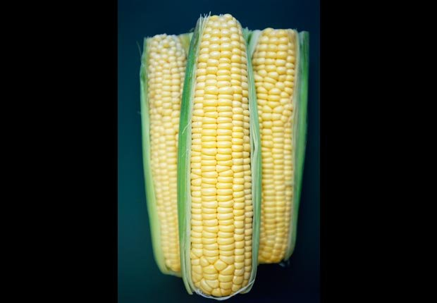 Corn on the Cobb, calorie dense foods