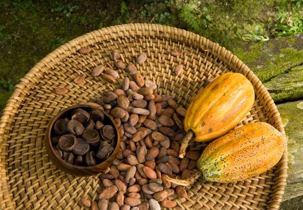 Los granos de cacao, Beneficios para la salud de Cacao