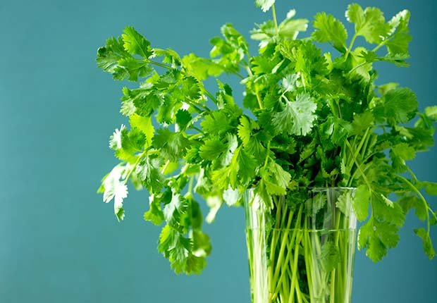 Cilantro, 9 Staple Herbs and Spices