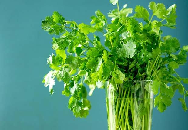 Cilantro, 9 Staple Herbs and Spices