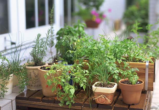 9 Staple Herbs and Spices