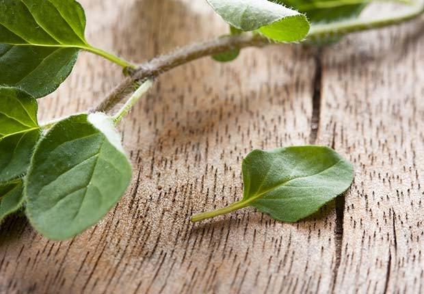 Oregano, 9 Staple Herbs and Spices