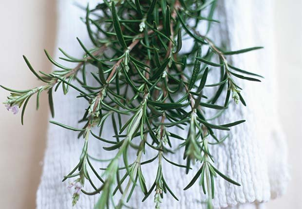 Rosemary, 9 Staple Herbs and Spices