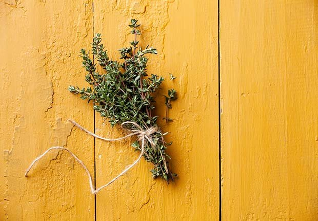 Thyme, 9 Staple Herbs and Spices