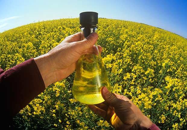10 tipos de aceite y sus beneficios para la salud