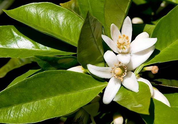 Flores que puedes degustar y sus beneficios