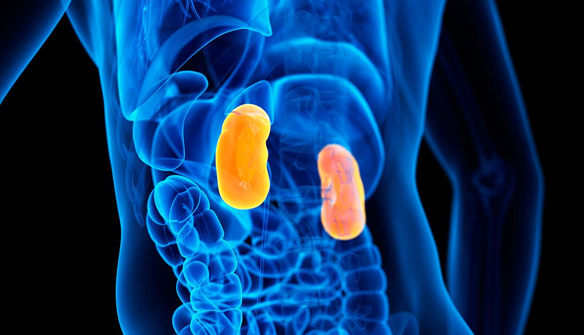 item 1 of Gallery image - Alimentos que ayudarán a mantener tus riñones saludables