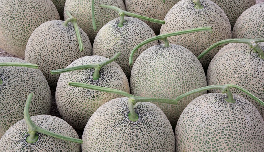 6 Fun Facts About Melons Fruit Food Trivia Cantaloupes, also known as muskmelons & rockmelons, trace their origin to africa and asia. 6 fun facts about melons fruit food trivia