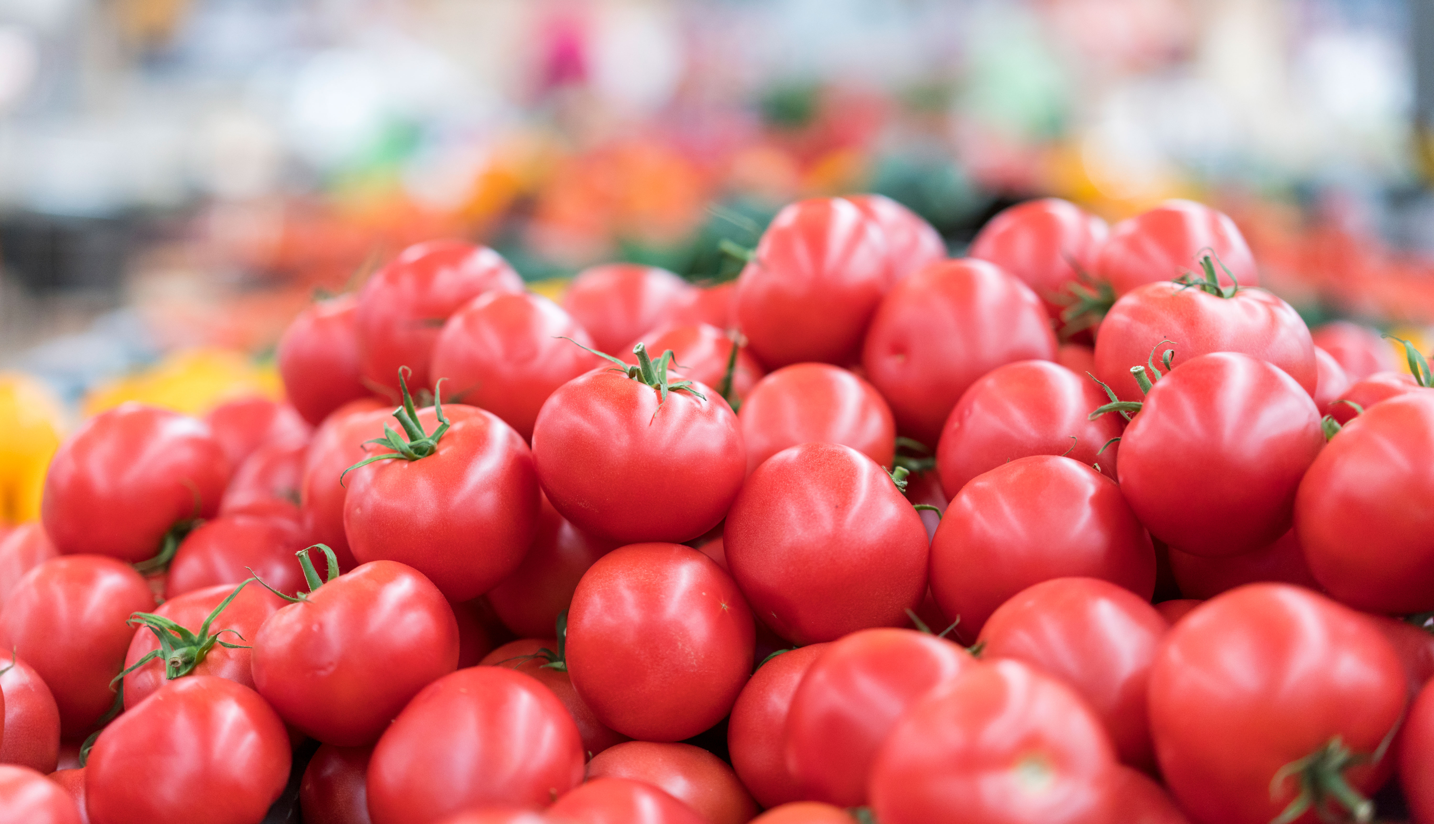 item 10 of Gallery image - Tomates