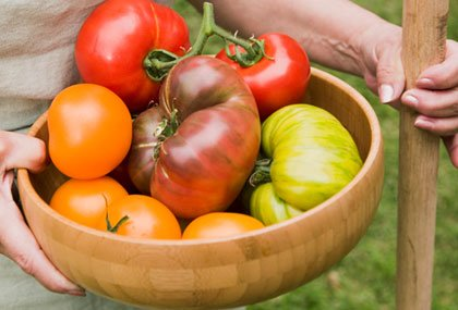 bowl of ripe multi-colored tomatoes
