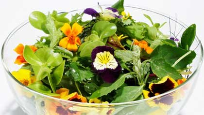 Information on edible flowers