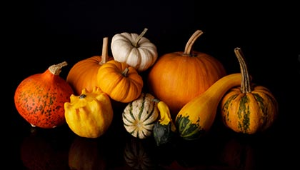 Still life with cucurbita pepo and edible pumpkins on black background - Recipes for Gourd Dishes