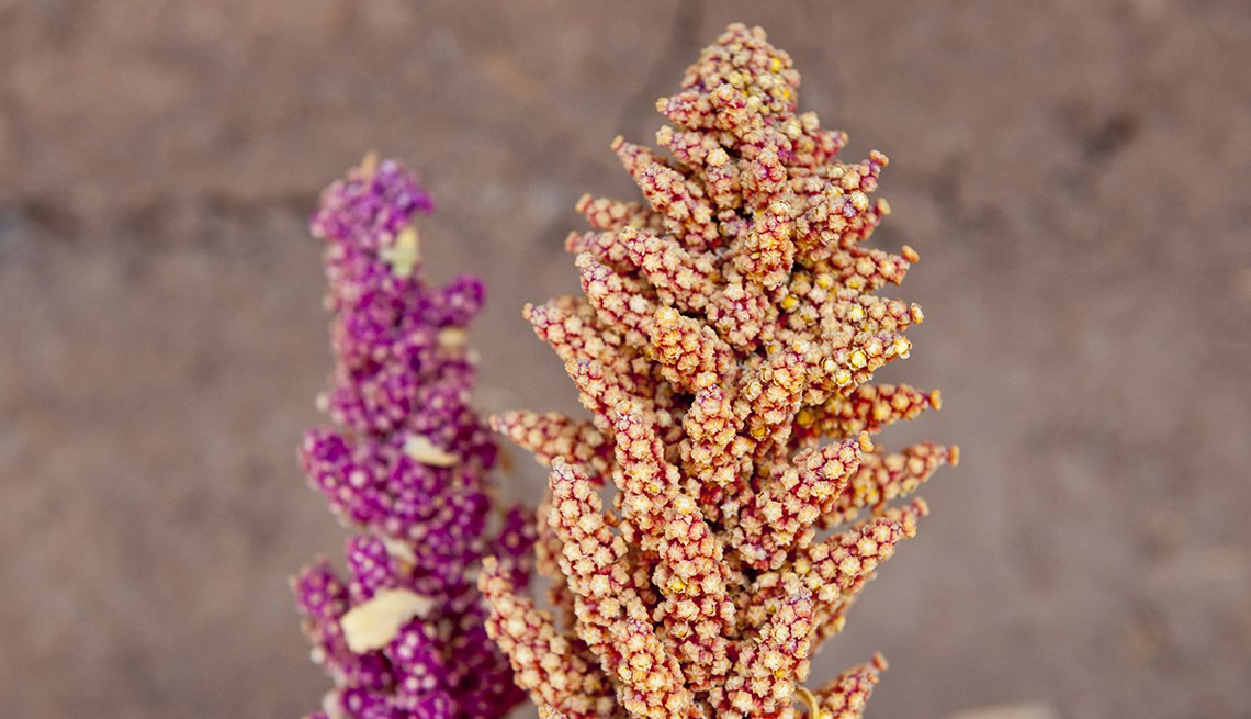 Espiga con granos de quinoa
