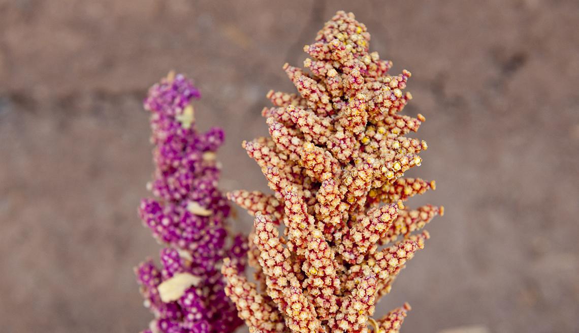 item 7 of Gallery image - Espiga con granos de quinoa