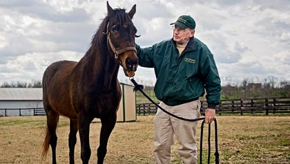 Michael Blowen rescues retired stallions