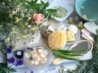 Plantas ornamentales y medicinales – manzanilla, lavanda y aloe vera –