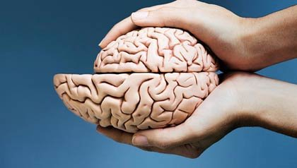 Manos que sostienen las dos mitades del cerebro con una más pequeña que la otra - Actividad fisica mantiene el cerebro joven