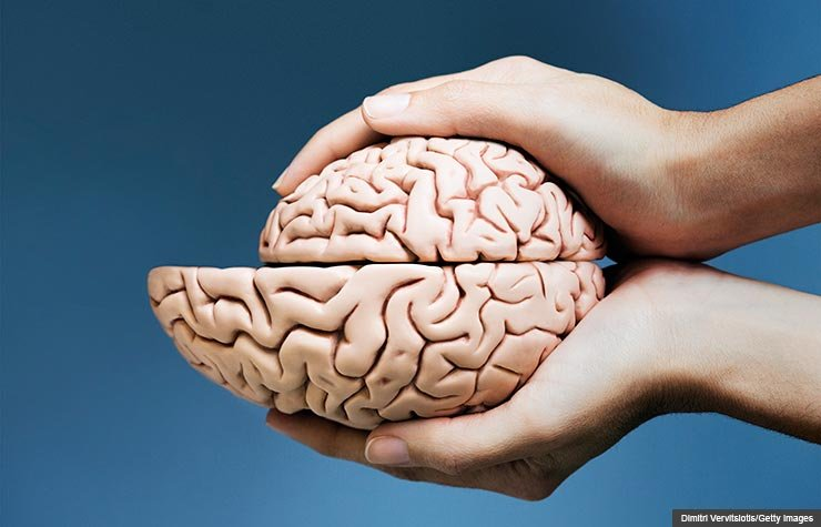Hands holding two brain halves with one smaller than the other, Brain shrinkage related to amount of exercise