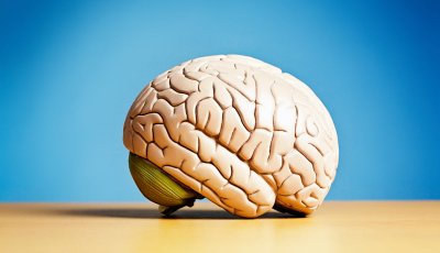 Model of brain, quiz on brain health