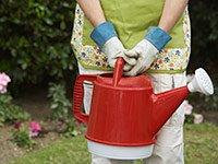 Incremente su ritmo cardíaco por la jardinería - Consejos económicos para estimular la capacidad mental