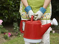 Get your heart rate up by gardening. Boost your brain power without breaking the bank.