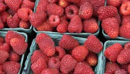 raspberry pints