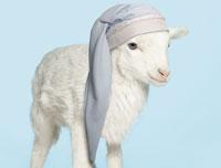 Cabra con un gorro de dormir en la cabeza - Más del sueño significa más poder del cerebro