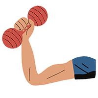 Ilustración de un brazo con músculos levantando una mancuerna
