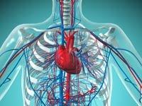 Ilustración de un corazón en el pecho de un hombre
