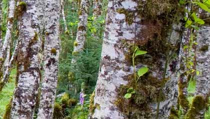 Tree limbs in a forest