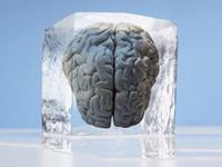 Un celebro congelado en un cubo de hielo