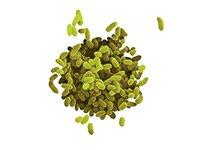 micrografía de la bacteria Klebsiella pneumoniae, las nuevas superbacterias